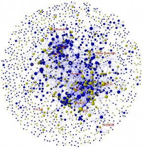 Representation of the human protein-protein interaction network showing disordered (yellow) and ordered (blue) proteins.